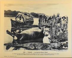 """TCHAD - N°259 Au Bord Du Fleuve CHARI - Collection """"Pour L'Enseignement Vivant"""" - Colonies Françaises - TBE - Collections"""