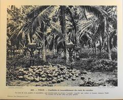 """TOGO - N°261 Cueillette Et Rassembl. Des Noix De C - Collection """"Pour L'Enseignement Vivant"""" - Colonies Françaises - TBE - Collections"""