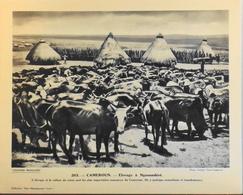 """CAMEROUN - N°263 Elevage à NGAOUNDERE - Collection """"Pour L'Enseignement Vivant"""" - Colonies Françaises - TBE - Collections"""