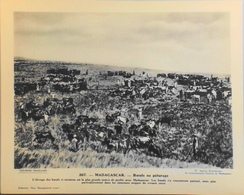 """MADAGASCAR - N°267 Boeufs Au Paturage - Collection """"Pour L'Enseignement Vivant"""" - Colonies Françaises - TBE - Collections"""