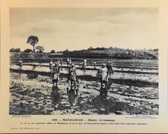 """MADAGASCAR - N°268 Le Repiquage Du Riz - Collection """"Pour L'Enseignement Vivant"""" - Colonies Françaises - TBE - Collections"""