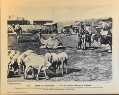 """COTE Des SOMALIS - N°271 Marché Indigène à DJIBOUTI -Collection """"Pour L'Enseignement Vivant"""" - Colonies Françaises - TBE - Collections"""
