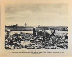 """COCHINCHINE - N°272 Hersage D'une Rizière - Collection """"Pour L'Enseignement Vivant"""" - Colonies Françaises - TBE - Collections"""