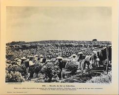 """INDOCHINE - N°282 - Récolte Du Thé - Collection """"Pour L'Enseignement Vivant"""" - Colonies Françaises - TBE - Collections"""