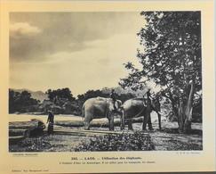 """LAOS - N°285 - Utilisation Des Eléphants - Collection """"Pour L'Enseignement Vivant"""" - Colonies Françaises - TBE - Collections"""