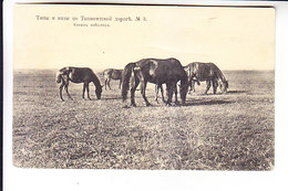 Middle Central Asia Russian Empire  RAILROAD ROAD OF ORENBURG - TASHKENT HORSES - Uzbekistan
