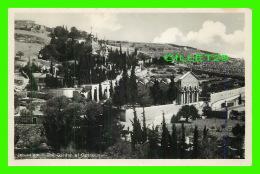 JERUSALEM, ISRAEL - THE GARDEN OF GETHSEMANI - SIONS-VERLAG - - Israel