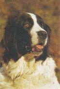 Landseer - Newfoundland Dog - Chien - Cane - Hund - Hond - Perro - Popp-Verlag - Chiens