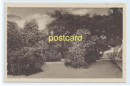BEIRA - LUIZ IGNACIO PARK , MOZAMBIQUE. OLD POSTCARD C.1920 #807. - Mozambique