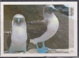 ECUADOR 2012 POSTAL STATIONARY GALAPAGOS ISLANDS PIQUERO BLUE LEGS - Ecuador