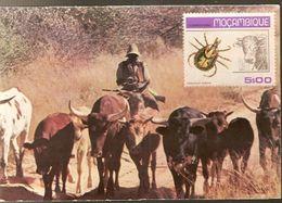 Botswana ** & Postal, Trekking Cattle Near Kang With Mozambique Stamp 1980 (4333) - Botswana