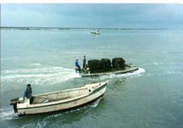 En Charente Maritime A L'embouchure De La Seudre Retour Des Parcs A Huitres  CPM Ou CPSM - France