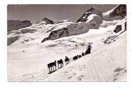HUNDE - POLARHUNDE, Schlittengespann, Jungfrau-Joch, Rottalhorn - Hunde
