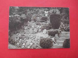 RUSSIA Batumi 1930-th Botanical Garden. The Japanese Department. Postcard - Russie