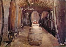 CPSM Arbois-Cave-Vigneron-Jacques Tissot                 L2634 - Arbois
