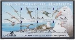 British Antarctic Territory - Antartique Britannique 2005 Yvert BF  10, Fauna, Bird Protection - Miniature Sheet - MNH - Territorio Antártico Británico  (BAT)
