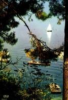 Lac De La Côte ; Expédiée De Cap Ferret - France