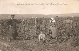 Vougeot - La Vendange Au Clos De Vougeot - Environs De Nuits Saint Georges - Non Classés