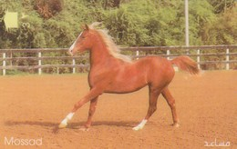 Oman - Horse - Mossad - 37OMNF - Oman