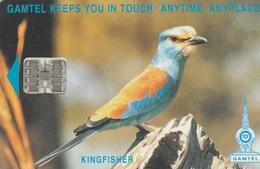 Gambia -  Bird - Kingfisher (CN: C511xxxxx) - Gambia