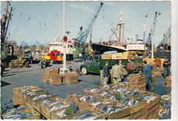 62  BOULOGNE SUR MER  - Débarquement Poisson  Camion  Citroen Et Renault - CPSM 10,5x15  BE Flamme Postale Boulogne 1964 - Boulogne Sur Mer