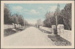 The Boulevard, Pointe-au-Pic, Murray Bay, Quebec, C.1910s - Photogelatine Engraving Co Postcard - Quebec