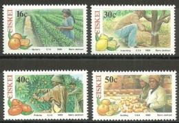 Ciskei 1988 Citrus Farming. MNH - Ciskei