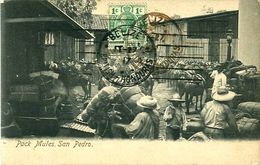 Cpa HONDURAS - Pack Mules -  San Pedro - Honduras