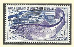 "T.A.A.F. 1977  Poste N° 71 ""Faune- Sujets Divers"" ** - Terre Australi E Antartiche Francesi (TAAF)"