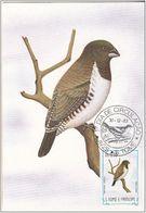 "727 S. Tomè E Principe 1983 Birds FDC Spermestes Cucullatus "" Bronzo Munia "" Passeri Maximum Card Maxi - Sparrows"