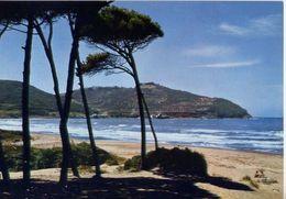 Piombino Populonia - Livorno - Il Golfo De Baratti - Formato Grande Viaggiata – E 6 - Massa