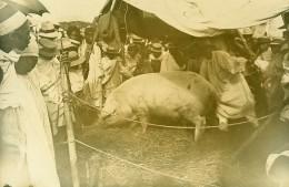 Madagascar Tananarive Foire Agricole Cochon Ancienne Photo Ramahandry 1910' - Africa