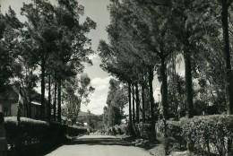 Madagascar Tananarive Arivonimamo L'Avenue Ancienne Photo 1950 - Africa