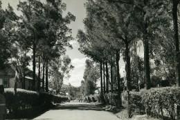 Madagascar Arivonimamo L'Avenue Ancienne Photo 1950 - Africa