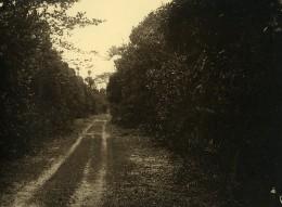 Vue Poétique De Madagascar Chemin De Campagne Ancienne Photo 1937 - Africa