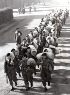 Essex Colchester Devonshire Regiment 1st Battalion Defile Ancienne Photo 1951 - War, Military