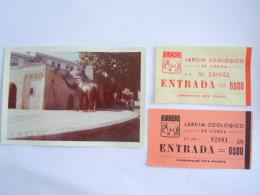 Portugal  Lisboa L'entrée Du Zoo Jardin Zoologique éléphant + 2 Ticket D'entrée 1962 Photo Form. 12,8 X 8,8 Cm - Lugares