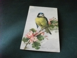 ILLUSTRATORE CATERINA KLEIN  UCCELLO BIRD  FIORI - Klein, Catharina