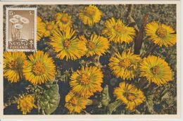 Carte Maximum Fleurs 1949 Tussilage 351 - Maximum Cards & Covers