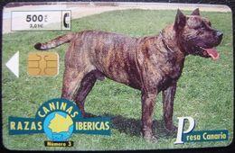 RAZAS CANINAS - Nº3 PRESA CANARIO - P 395 - USADAS 1ª CALIDAD - A641 - España