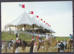 UAR ,  CAMEL  RACING  , OLD OSTCARD - Emirats Arabes Unis