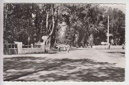 A446 - LES MATHES - LE CLAPET - Carrefour En Forêt De La Coubre - Les Mathes
