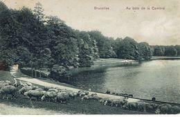 BRUXELLES- LE BOIS DE LA CAMBRE-TROUPEAU DE MOUTONS - Forêts, Parcs, Jardins
