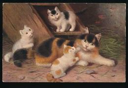 KATTEN , KAT , CAT , CATS , CHAT , CHATS - Cats
