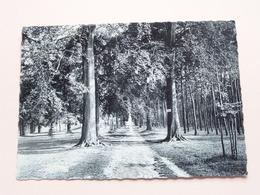 Weg Naar De Kroningskapel AVERBODE ( Thill ) Anno 1960 ( Zie Foto ) ! - Scherpenheuvel-Zichem