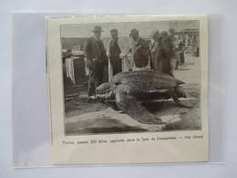 1925 - Baie De Concarneau - Capture Tortue Géante Luth Tortoise - Coupure De Presse Originale (Encart Photo) - Historical Documents
