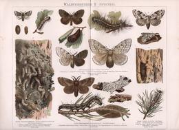CHROMO-LITHOGRAPHIE AUS MEYER'S LEXIKON 1895   WALD VERDERBER   SCHMETTERLINGE  (SPINNER) - Lithographies