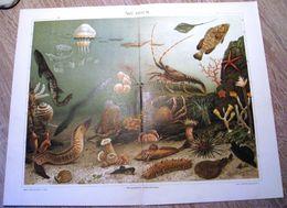 CHROMO-LITHOGRAPHIE AUS MEYER'S LEXIKON 1895   AQUARIUM - Lithographies