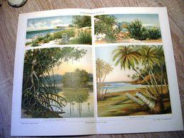CHROMO-LITHOGRAPHIE AUS MEYER'S LEXIKON 1895  STRANDPFLANZEN - Lithographies