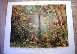 CHROMO-LITHOGRAPHIE AUS MEYER'S LEXIKON 1895  ARACEEN - Lithographies